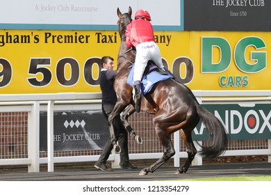 HORSE RACING - A horse rears up in the Parade Ring with Jockey Kieran Shoemark displaying great horsemanship at Nottingham Races : Colwick Park, Nottingham, UK : 17 October 2018 : Pic Mick Atkins