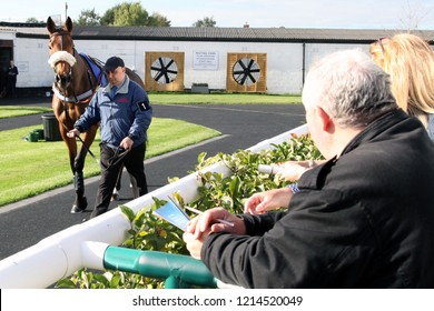 HORSE RACING - A spectator watches a horse being led around the pre-Parade Ring at Market Rasen Races : Market Rasen Racecourse, Lincolnshire, UK : 20 October 2018