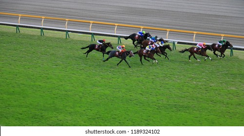 Horse racing , thoroughbred competing in the last straight line