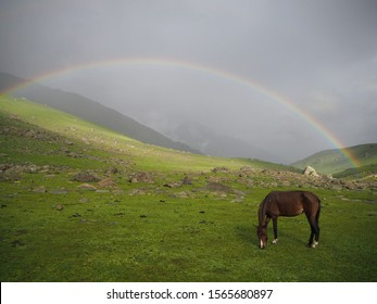 horse With a rainbow and mountain in the Romantic view of an landscape of Sonamarg, Jammu and Kashmir state, India