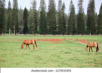 Horse Ranch Farm Lanai Island Hawaii