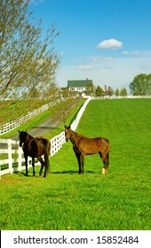 A horse ranch in Kentucky, USA with horses standing along the white fence and the house in the background.