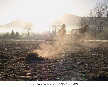 Horse range with fresh smoked faeces. The horses freely cross the muddy run.