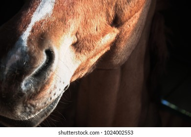An horse ready for a caress