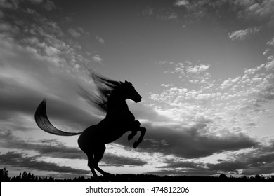 Horse Rears Silhouette, Black and White