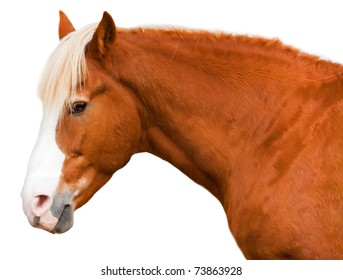Horse of red color with sad eyes isolated on a white background