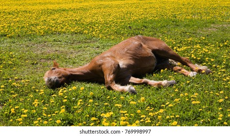 Horse relax green grass summer time Moscow Russia