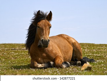 horse at rest