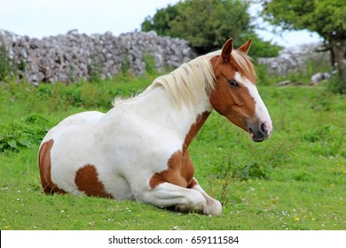 Horse resting in the field