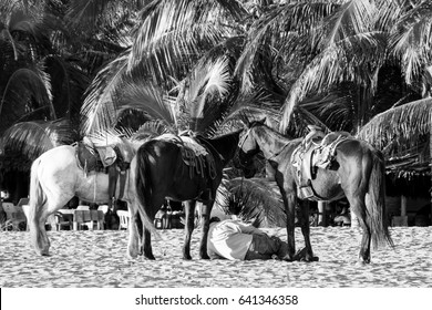 Horse ride by the beach