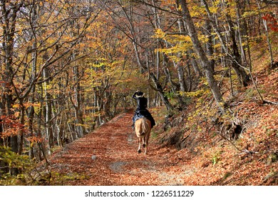Horse ride, horsewoman in black riding a horse rides in the autumn forest