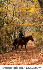 Horse ride, a woman riding a horse in the autumn forest