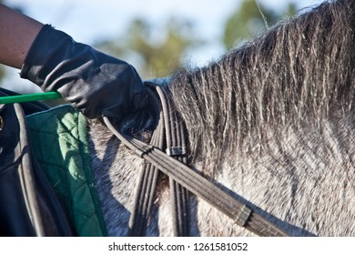 Horse rider clasping reins of horse to direct which way it is moving.