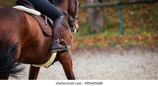 Horse with rider close up of riding boot in stirrup, focus on the boot photographed from behind.