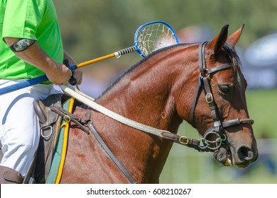 Horse Rider Closeup Unidentified Polocrosse Polocrosse horse player closeup unidentified abstract equestrian sports game.
