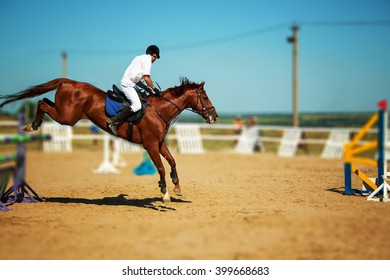 Horse and rider, equestrian