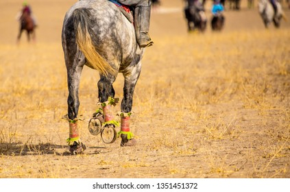 Horse rides. Horseshoes on the legs of horses. Horses run with a holo, jumps to victory leader, hoofs and feet run on the pitfall. hooves.