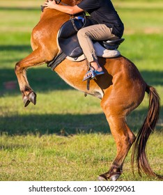 Horse riding in the lawn.