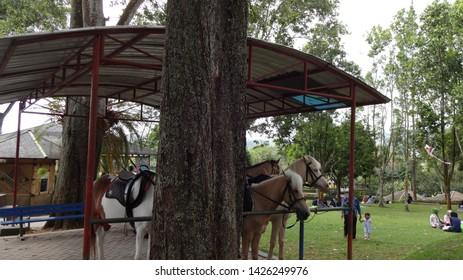 Horse riding park for horse entusiast in nusantara flower garden, cisarua, west java, indonesia. photo taken in june 2019