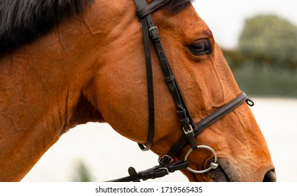 Horse at riding school in different poses