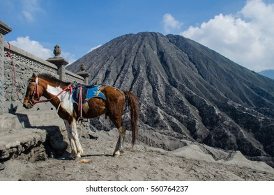 Horse riding service around Bromo Mountain Java, Indonesia.