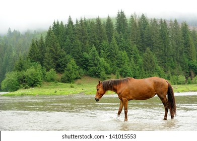 A horse in a river on a background of mountains