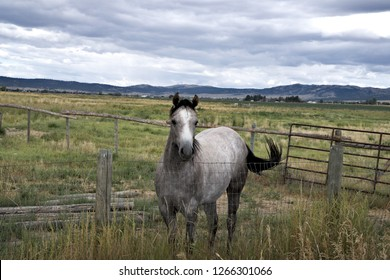 Horse roan at pasture fence.