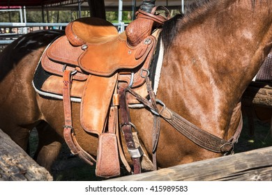 The horse with rodeo equipment for cowboys and cowgirls - leather saddle ready for riding