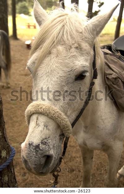 A horse in Rotorua, New Zealand