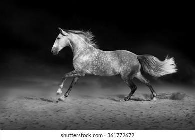 Horse run gallop on desert dust