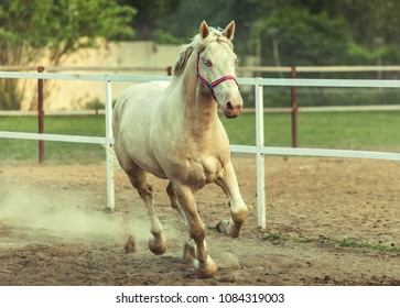 Horse runing galop