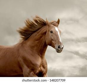 horse running closeup