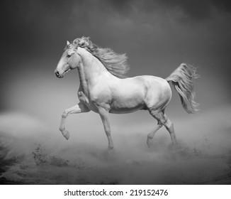 horse running in desert