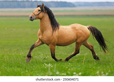 Horse running in the field.