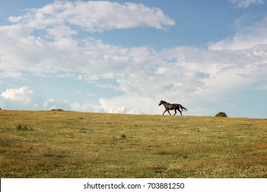 Horse running free through the green valley