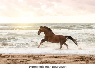 horse running in freedom at the beach
