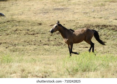 Horse running freely in pasture