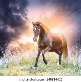 Horse running green field over dramatic sky