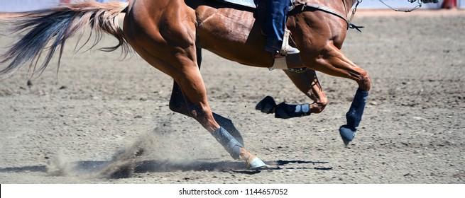 Horse running at rodeo