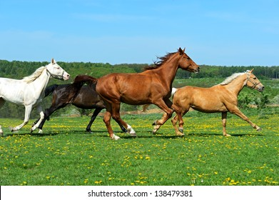 The horse runs gallop on the field