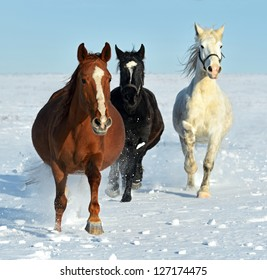 The horse runs gallop on a snowy field.