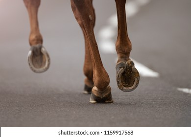 The horse runs on the asphalt road, the detail of the hooves