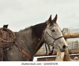 Horse saddled for ranch work