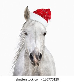 horse with santa hat on white background