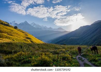 Horse in scenic valley in early morning sun, Svaneti region, Georgia