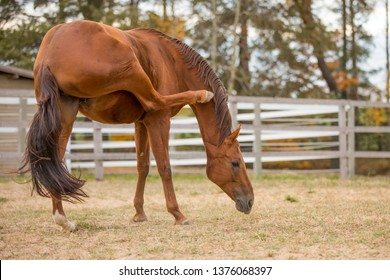 horse scratching itself with hind leg in paddock in autumn