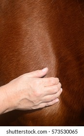 Horse shaitsu massage therapy being carried out by practitioner