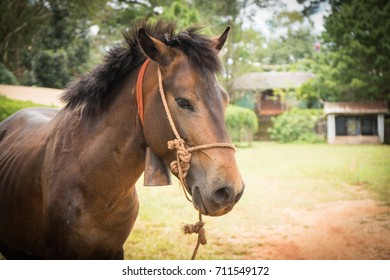 A horse in side view