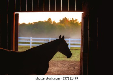 Horse silhouette in barn.