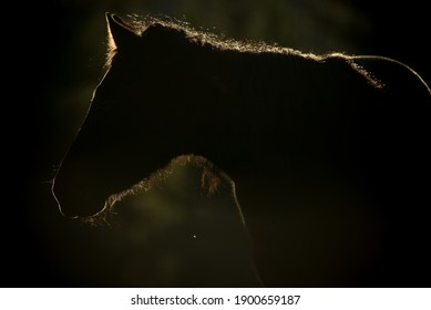 A horse silhouette in the early hours.